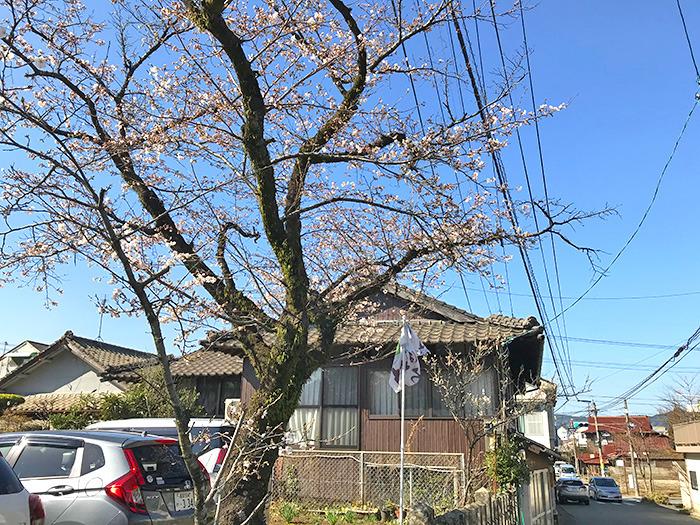 ヤマックスyamax新築炭の家阿蘇神社お花見と馬ロッケ4.jpg