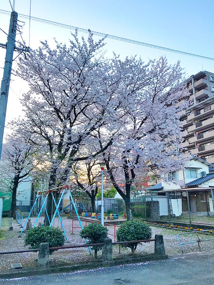 ヤマックスyamax新築炭の家阿蘇神社お花見と馬ロッケ8.jpg